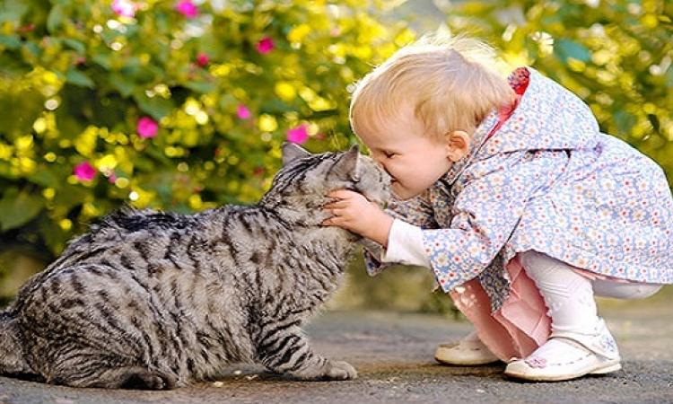 لمحبى القطط .. أكيد قطتك ولا حاجة جمب دول ..