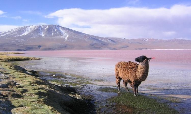 بوليفيا المغمورة .. أرض العجائب المذهلة والطبيعة الساحرة