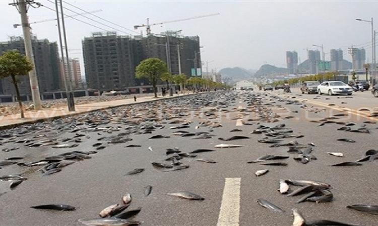 بالفيديو .. الأرض بتنبت سمك تعابين فى الصين !!