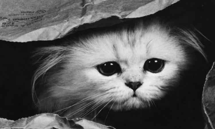 قصة مضحكة باللهجة المصرية .. القطة والبارفان