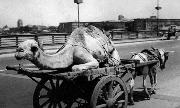 بالصور .. مصر من 80 سنة