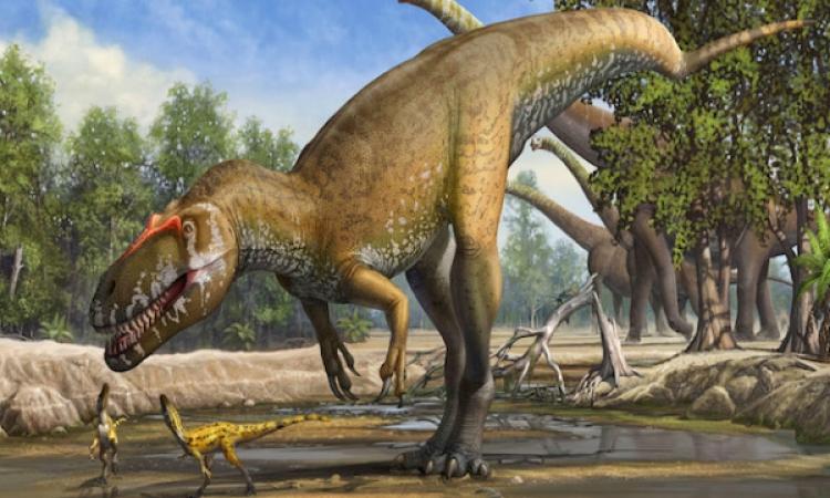 حيوان السمندل العملاق القادم من العصر الجوراسى .. الديناصورات يعنى!!