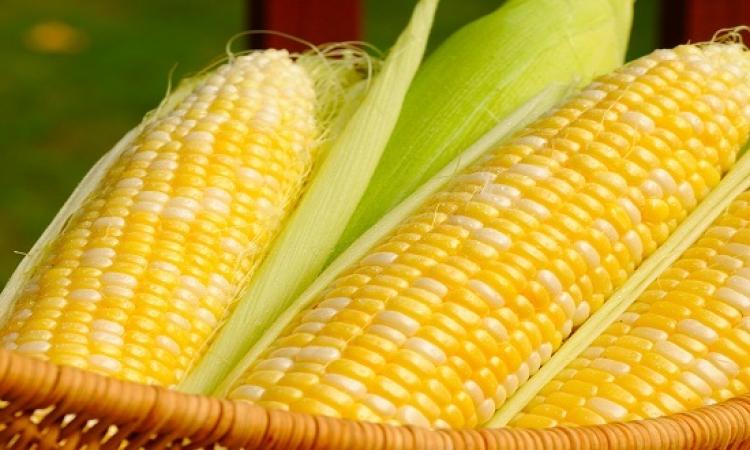 بالفيديو .. أسرع طريقة لأكل الذرة فى 10ثوانى بس