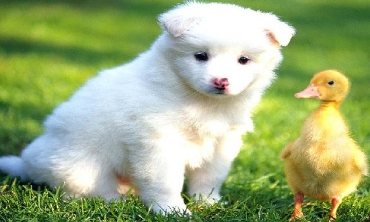 بالفيديو .. مراحل تطور كلب: 23 ثانية ترصد حياته من جرو صغير الى وحش