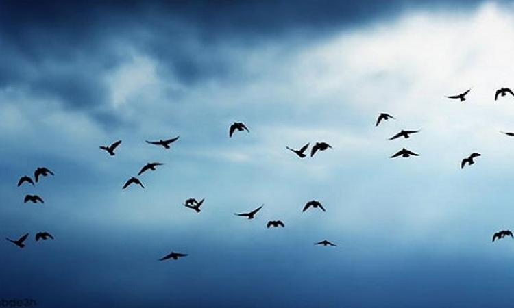 الناس فى العالم بتحتفل بالطيور المهاجرة