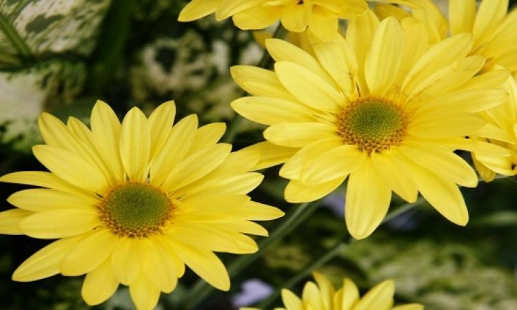 بالصور .. اللون الأصفر لصيف 2015