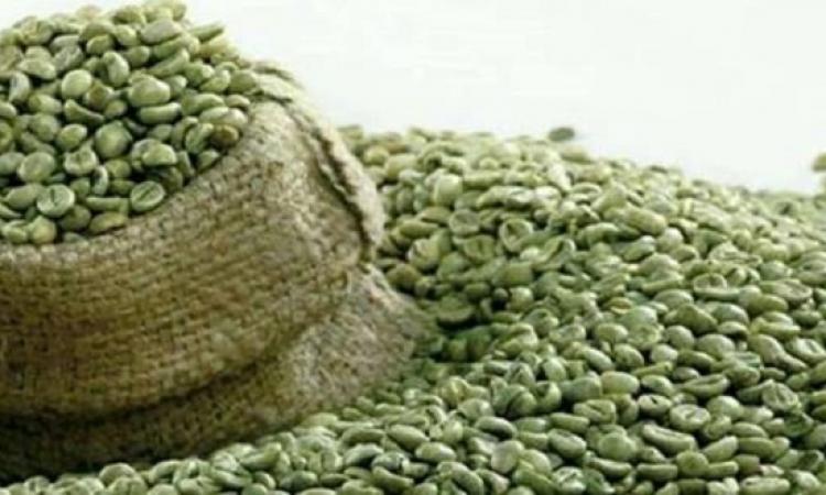تناول القهوة الخضراء قبل الطعام يومياً تحرق الدهون