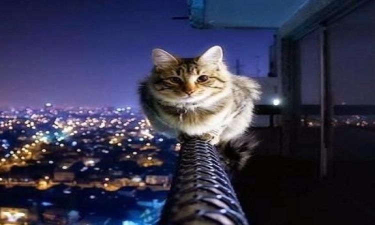 تعلم لغة القطط وهل هى كائنات أجتماعية ام لا