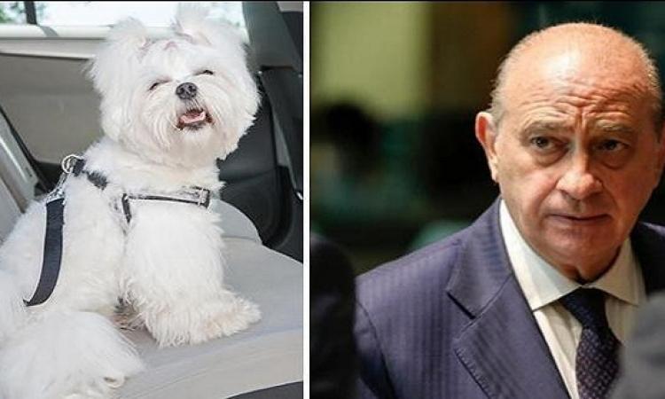 وزير الداخلية الإسبانى تحت طائلة الاستجواب البرلمانى بسبب كلبته