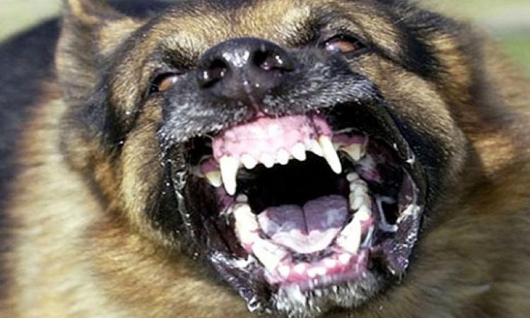 كلب يقتل طفل فى عمر 3 اسابيع بدافع الغيرة