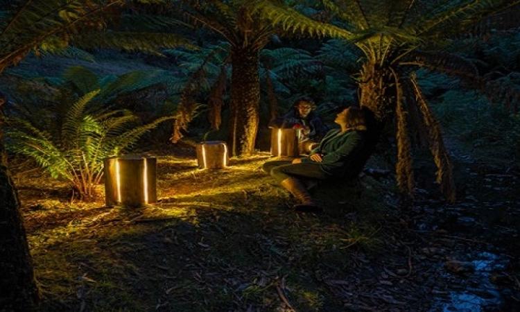 بالصور .. افكار للإضاءة من جذع الشجر .. ابدااع