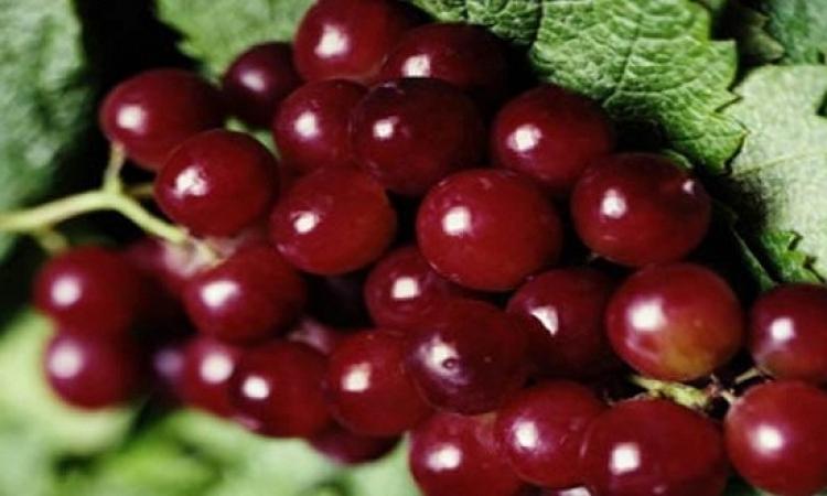 العنب الأحمر يساهم بالوقاية من السرطان