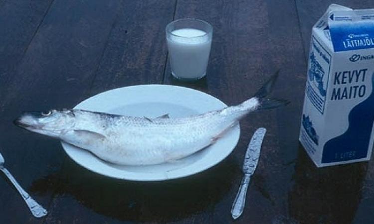 سمك لبن تمر هندى.. هل هناك مشكلة من جمع اللبن والسمك فى وجبة واحدة؟