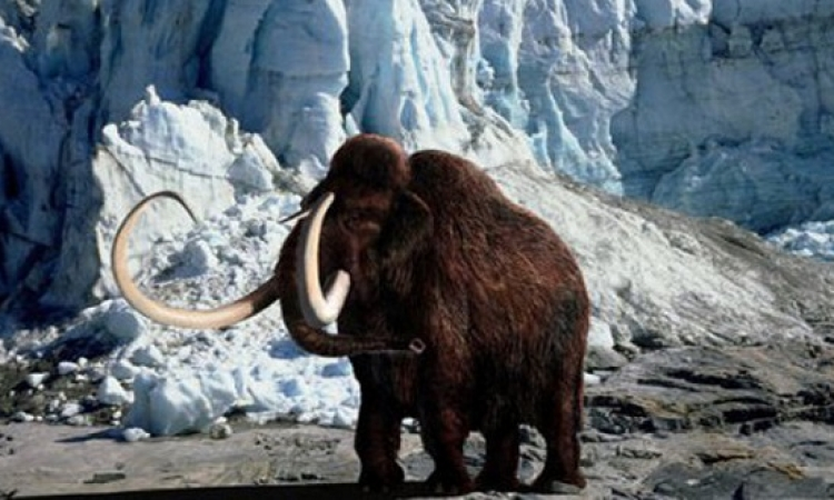 أسباب انقراض الماموث.. البشر أم التغيرات المناخية؟!!