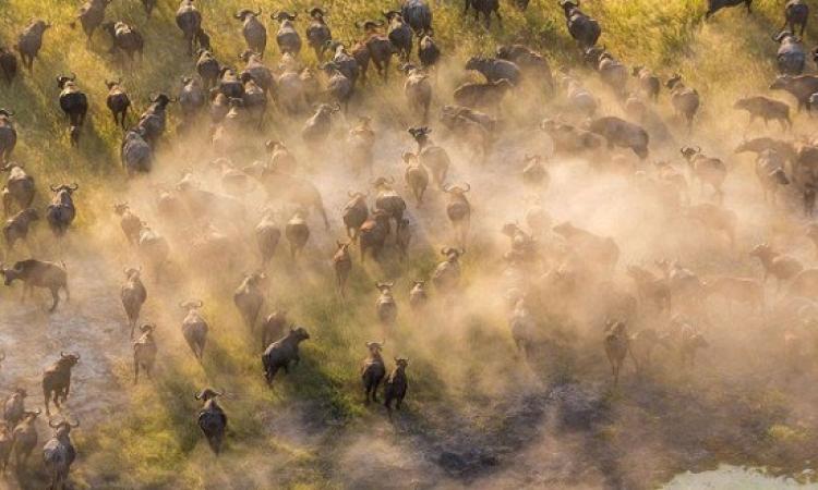صور مذهلة لعمالقة الحياة البرية من ارتفاع 3 آلاف قدم .. أنا مهما كبرت صغير!!