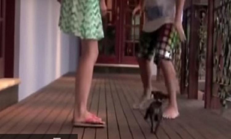 بالفيديو.. كلب ظريف يدافع عن صديقته ضد اخوها