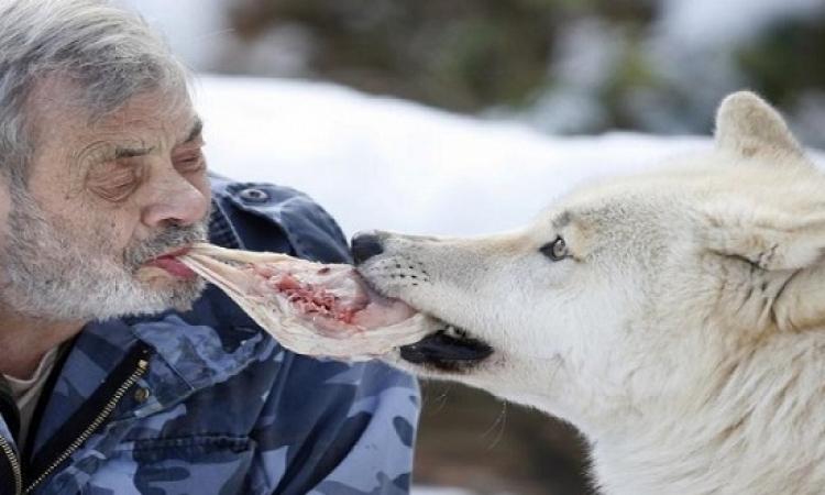 الرجل الذئب .. يعيش بين قطيع من الذئاب المفترسة منذ 40 سنة !!