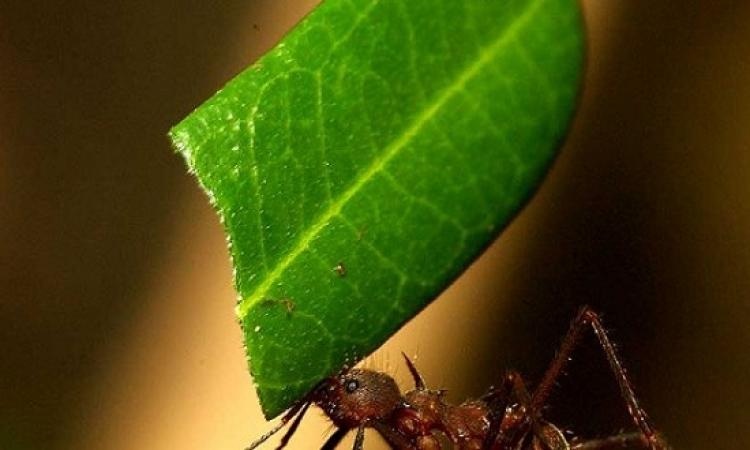ماذا تفعل النملة عندما تعلم بقرب موتها