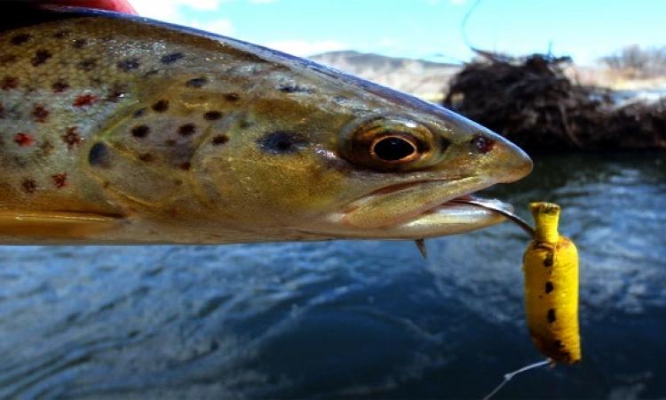 علاقة السمك والموز بحساسية الأنف