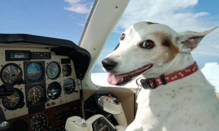 طائرة تهبط هبوط اضطراريا لإنقاذ حياة كلب