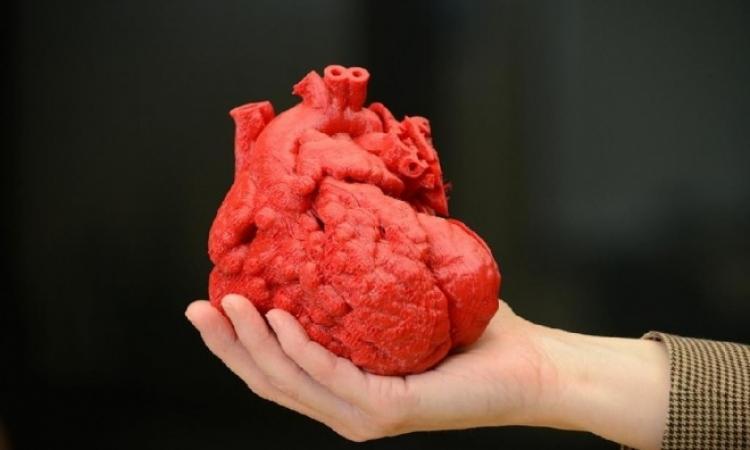 علماء يبتكرون قلباً صناعياً ثلاثى الأبعاد.. ولسة ياما هنشوف