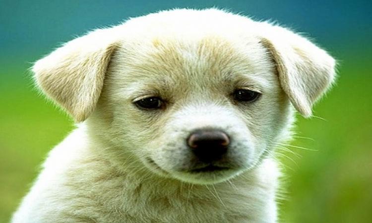 احذر .. حيوانك الأليف قد يسبب لها الأرق وعدم النوم !!