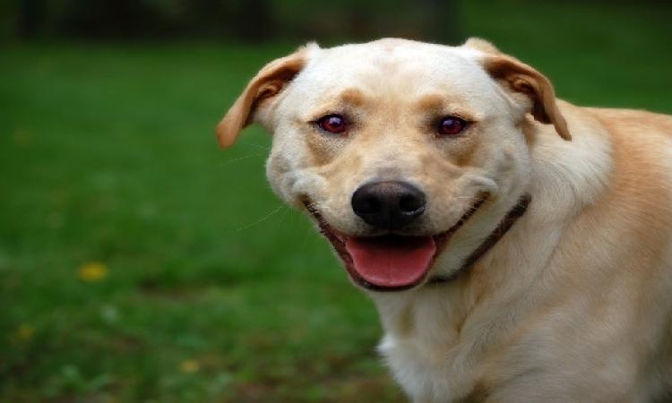 بالفيديو.. كلب يبتسم للكاميرا.. اضحك الصورة تطلع حلوة