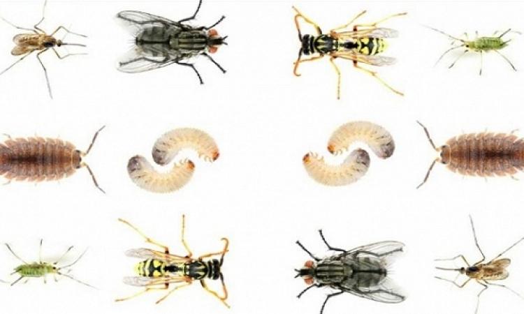 طرق فعالة تخلصك من حشرات الشتاء فى المنزل