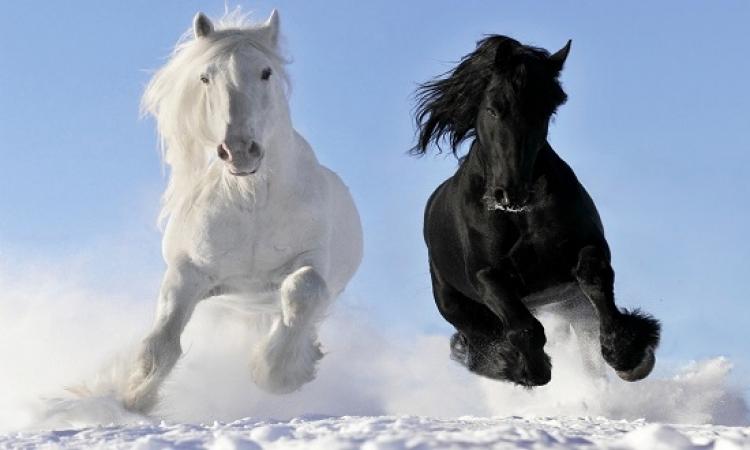 بالصور .. سحر الخيول فى الخريف والشتاء