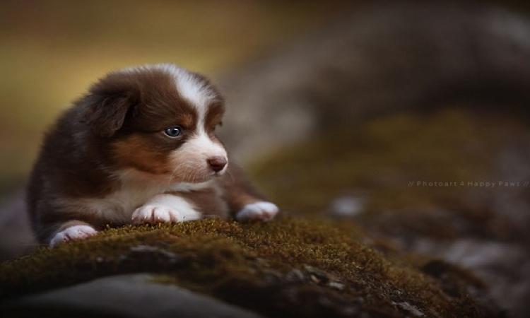 عندما يصبح الكلب بطلاً للصور .. شاهد وانبهر !!