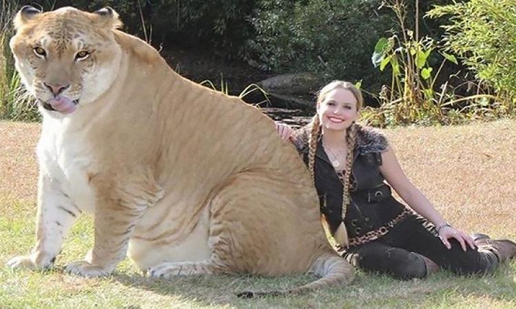 بالصور .. حيوانات حقيقية مهجنة .. هتندهش انها موجودة فعلاً !!