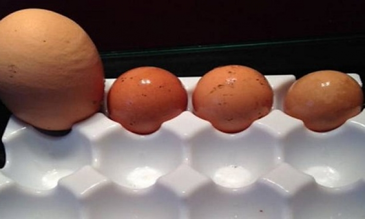 بالفيديو .. ماذا وجدت السيدة داخل بيضة كبيرة عملاقة ؟