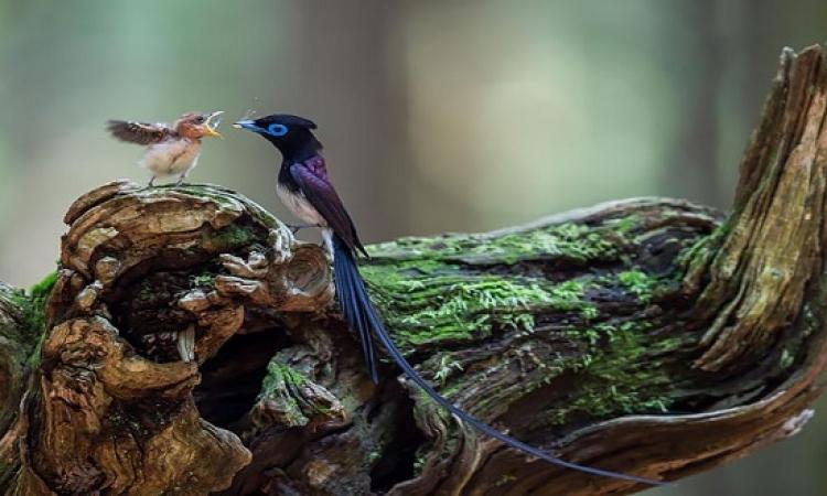 صور مذهلة لأمومة الطيور ورعايتها لصغارها .. حنان الأم !!