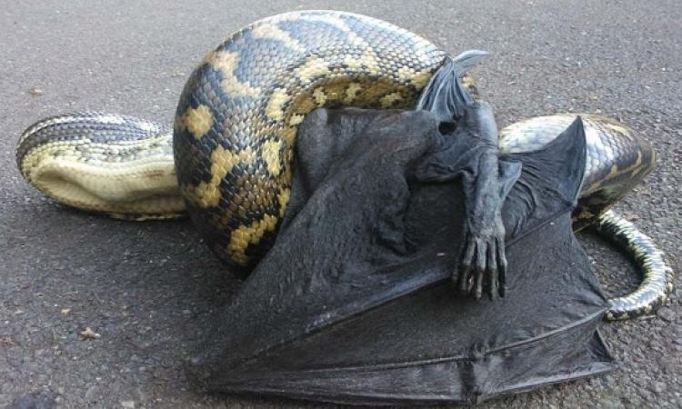 الوجة الآخر لاستراليا .. 14 صورة مخيفة ستصدمك وتفزعك !!