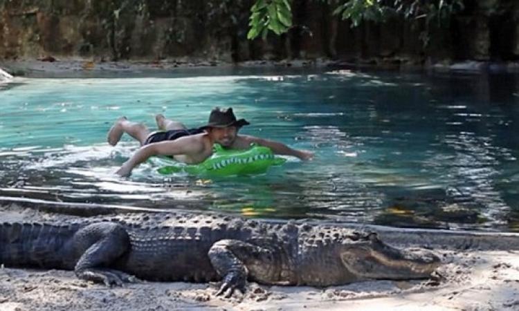 بالفيديو .. مغامر يسبح وسط مجموعة تماسيح مفترسة !!