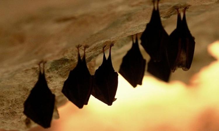 إغلاق مستشفى أميركية بسبب غزو الخفافيش