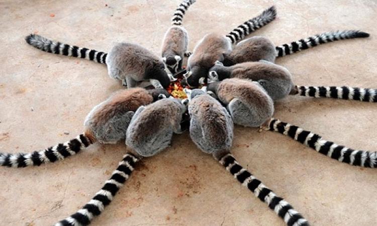 صور طريفة لحيوانات فى أوضاع غريبة .. عملوها إزاى كده ؟!