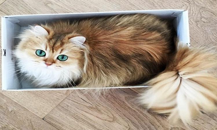بالصور .. Smoothie القطة الأجمل فى العالم .. فوتوجنيك خالص !!