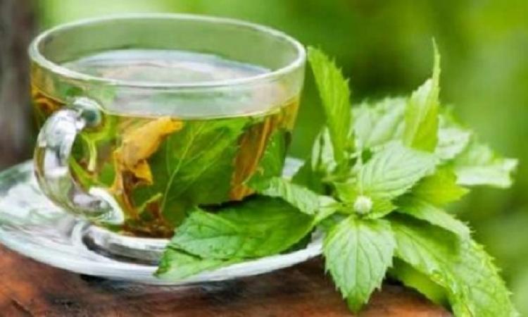 4 نباتات تخلصك من السموم والسوائل الزائدة فى جسمك