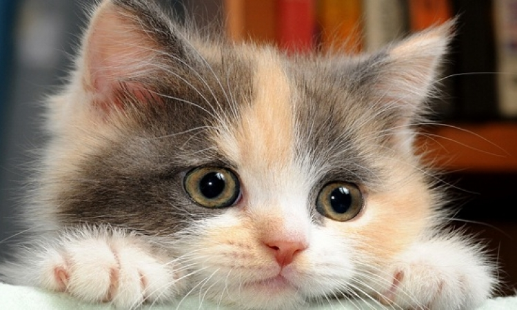 للأطفال قبل النوم .. قصة القطة المتحيرة مع الحيوانات