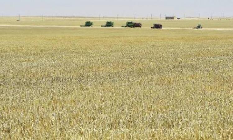 السيسى يشهد الاحتفال بيوم الحصاد ويفتتح قرى زراعية بالفرافرة
