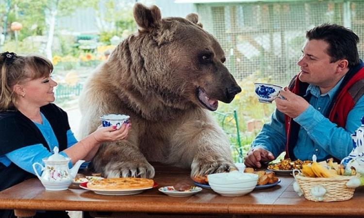 بالصور .. فى روسيا بيربوا دببة فى البيت .. تغيير برضه !!