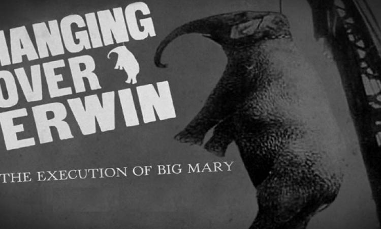 بالصور .. حكاية مارى أشهر فيلة أعدمت شنقاً فى التاريخ