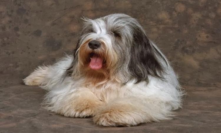 بالصور .. مسابقة اجمل كلب ببلجيكا .. لو بتتعصب متتفرجش !!