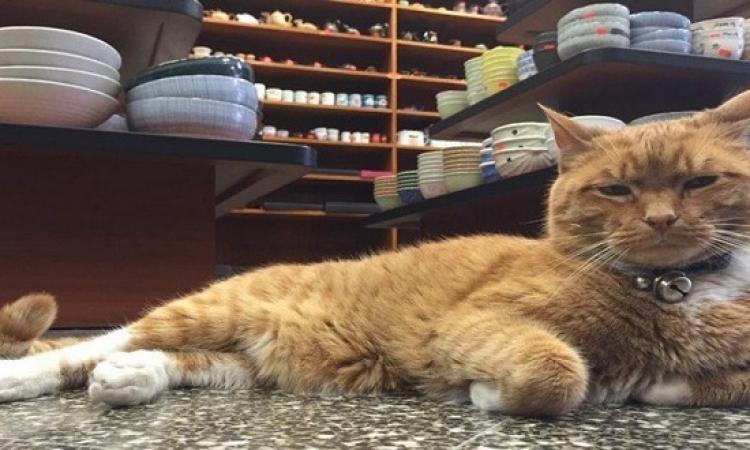 بالصور .. قصة القط «بوبو» الموظف فى متجر بنيويورك