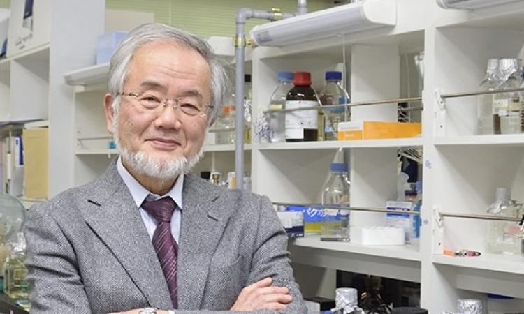 منح نوبل للطب لعالم يابانى لابحاثه فى الإلتهام الذاتى للخلايا