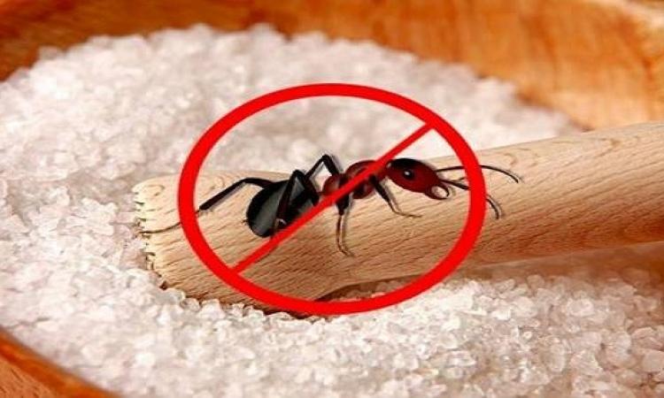التسمم البطئ .. الحل الأنسب للتخلص من النمل