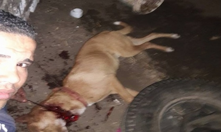 """بالصور.. شاب يذبح كلبًا.. ويؤكد: """"فدا الشيطان"""""""