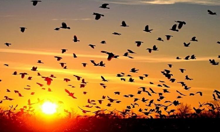 رصد مسار الطيور المهاجرة بالعين السخنة