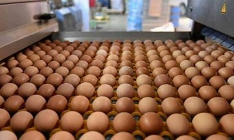 بعد 4 أشهر من توزيعه .. اكتشاف فضيحة البيض الملوث فى أوروبا